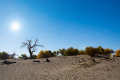 This image is about dead trees in the desert Stock Photography