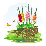 Image of decorative garden wheelbarrow with beautiful flowers. Vector image of decorative wheelbarrows, on which grow beautiful multicolored flowers Gladiolus Royalty Free Stock Image