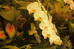 WHITE ORCHIDS IN A HOTHOUSE. Image of a delicate white orchid with other tropical plants in a hothouse stock photo
