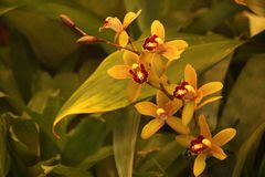 YELLOW AND RED ORCHIDS IN A HOTHOUSE. Image of a delicate yellow and red orchid with varied tropical plants in a hothouse stock images