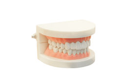 The image of dentures Royalty Free Stock Photo