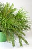 Image des branches de sapin Photographie stock
