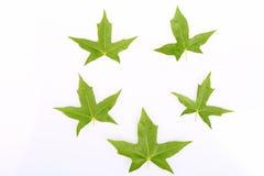 Image des feuilles d'érable Photographie stock