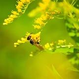 Image des fleurs jaunes dans une fin de champ  Photographie stock