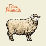 Image des moutons avec le contour noir Photos libres de droits