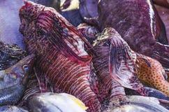Image des poissons de lion sur le marché à vendre à manger photographie stock