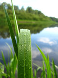 Dewdrop on a green blade near river Stock Image