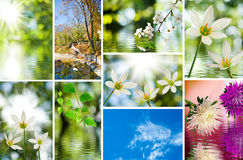 Image of different beautiful flowers in the garden closeup Stock Photo