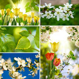 Image of different colors Royalty Free Stock Photos