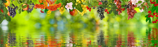 Image of different fruits over the water closeup Royalty Free Stock Photography