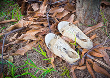 Image of  dirty white shoes  under tree.  Royalty Free Stock Photo
