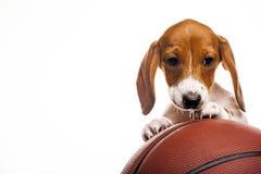 Image of dog basketball white background