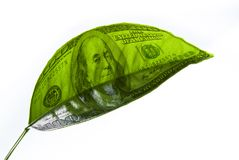 Image of dollars on a piece of plant Stock Photography