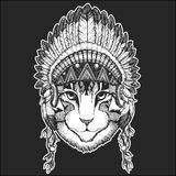 Image of domestic cat Cool animal wearing native american indian headdress with feathers Boho chic style Hand drawn. Image of domestic cat Hand drawn Stock Photos