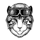 Animal wearing aviator helmet with glasses. Vector picture. Image of domestic cat Hand drawn illustration for tattoo. Image of domestic cat Hand drawn Royalty Free Stock Images