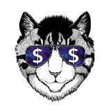 Image of domestic cat wearing glasses with dollar sign Illustration with wild animal for t-shirt, tattoo sketch, patch. T-shirt print with wild animal wearing stock image