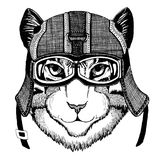Image of domestic cat wearing motorcycle helmet, aviator helmet Illustration for t-shirt, patch, logo, badge, emblem. Image of domestic cat Hand drawn royalty free stock photography