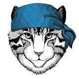 Image of domestic cat Wild animal wearing bandana or kerchief or bandanna Image for Pirate Seaman Sailor Biker Stock Images
