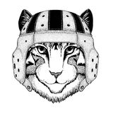 Image of domestic cat Wild animal wearing rugby helmet Sport illustration Royalty Free Stock Photos