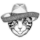 Image of domestic cat Wild animal wearing sombrero Mexico Fiesta Mexican party illustration Wild west. Wild animal wearing sombrero Mexico Fiesta Mexican party Royalty Free Stock Images