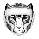 Image of domestic cat Wild boxer Boxing animal Sport fitness illutration Wild animal wearing boxer helmet Boxing. Wild boxer Boxing animal Sport fitness Royalty Free Stock Image
