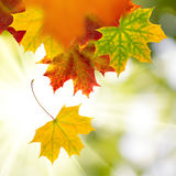 Image of dry autumn leaves closeup Stock Photography