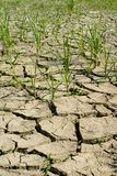 Image of dry earth Stock Photography