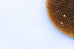 Image of dry and empty bee nest on white paper Stock Photo