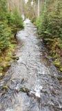 Image du chemin au Schwellhäusel dans la forêt bavaroise (Allemagne) Image stock