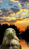 Image of eagle against the sunset closeup Royalty Free Stock Photography