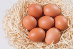 Image of Eggs in nest Stock Photography
