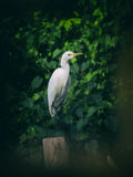 Image of egret on tree branch. in forest, Thailand. Vintage Filt Stock Photo