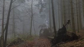 Image of a fallen tree on a path after a big storm with haze in the forest. Amazing image of a fallen tree on a path after a big storm, with haze in the middle stock images
