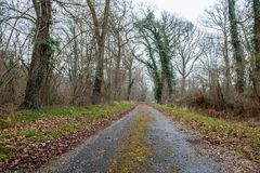 A lonely country  road in france. This image features a lonely country road in france in the autumn stock photos