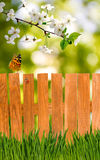 Image of the fence and the grass in the garden closeup Stock Image