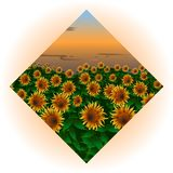 Image of a field with a sunflower in the shape of a diamond. An icon for the design of a travel agency website, for a site Stock Photos