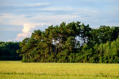 Image of a field with trees an blue sky with clouds royalty free stock photography