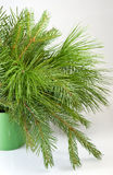 Image of fir branches Stock Photography