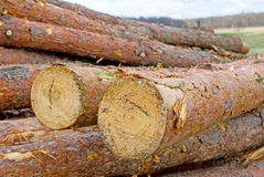 Image of firewood in the village Stock Photo
