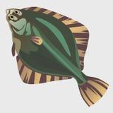 Image of flatfish in the flat style. Marine series illustrations Royalty Free Stock Photography