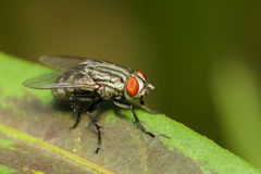 Image of a flies Diptera on green leaves. Insect. Stock Photos