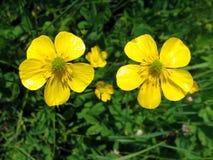 Image of flower Stock Photo