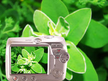 Image of the flower on the screen the camera. Colorful background stock image