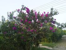 A flowering tree holding lots of flowers stock photo