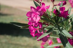 Picture of flowers in the park on the right side stock photography