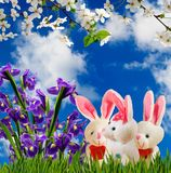 Image of flowers and toy hares close-up. Image of flowers and toy hares closeup Royalty Free Stock Photos