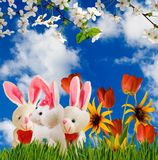 Image of flowers and toy hares close-up. Image of flowers and toy hares closeup Royalty Free Stock Image