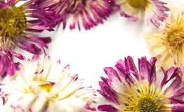 Flowers and heart on white royalty free stock photos