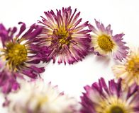 Flowers and heart on white royalty free stock image