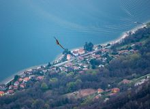 Image of flying eagle with lake magiorre in the background royalty free stock images